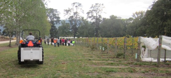 Picture of Entally Estate vineyard